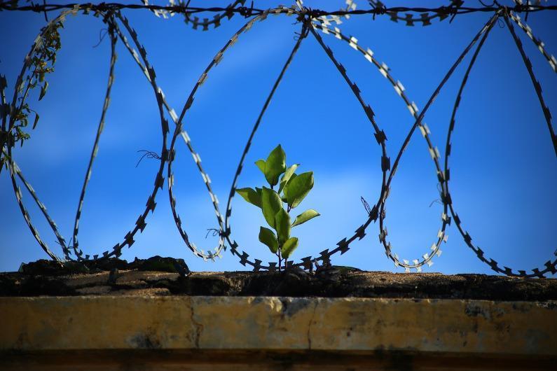 COVID-19: llamamiento por l@s detenid@s en cárceles de Asad Es urgente acceder a instalaciones de detención